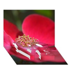 Bright Red Rose Love Bottom 3d Greeting Card (7x5)