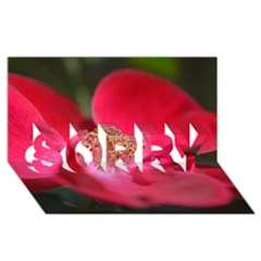 Bright Red Rose Sorry 3d Greeting Card (8x4)
