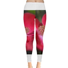 Bright Red Rose Women s Leggings