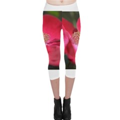 Bright Red Rose Capri Leggings
