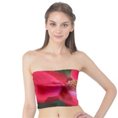 Bright Red Rose Women s Tube Tops