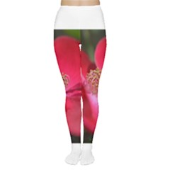 Bright Red Rose Women s Tights