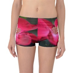 Bright Red Rose Boyleg Bikini Bottoms