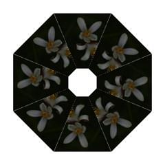 Lemon Blossom Golf Umbrellas