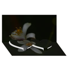 Lemon Blossom Twin Heart Bottom 3D Greeting Card (8x4)