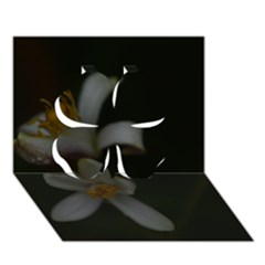 Lemon Blossom Clover 3d Greeting Card (7x5)
