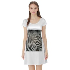 Unique Zebra Design Short Sleeve Skater Dresses