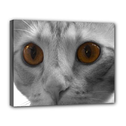 Funny Cat Canvas 14  X 11
