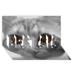 Funny Cat BEST SIS 3D Greeting Card (8x4)