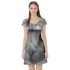 Funny Cat Short Sleeve Skater Dresses