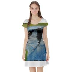 Blue Jay Short Sleeve Skater Dresses