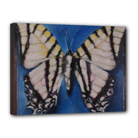 Butterfly Canvas 16  X 12