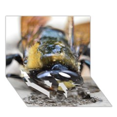 Bumble Bee 2 Love Bottom 3d Greeting Card (7x5)