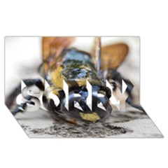 Bumble Bee 2 SORRY 3D Greeting Card (8x4)