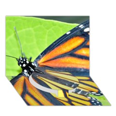 Butterfly 2 Circle Bottom 3D Greeting Card (7x5)