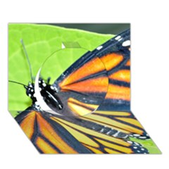 Butterfly 2 Circle 3D Greeting Card (7x5)
