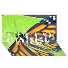Butterfly 2 SORRY 3D Greeting Card (8x4)