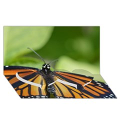 Butterfly 3 Twin Heart Bottom 3d Greeting Card (8x4)