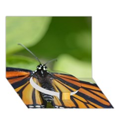 Butterfly 3 Circle Bottom 3D Greeting Card (7x5)