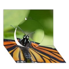 Butterfly 3 Circle 3D Greeting Card (7x5)