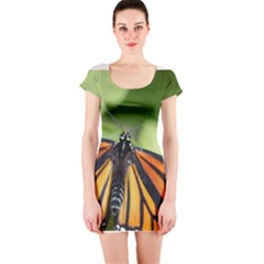 Butterfly 3 Short Sleeve Bodycon Dresses