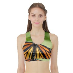 Butterfly 3 Women s Sports Bra with Border