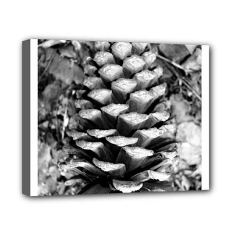 Pinecone Spiral Canvas 10  X 8