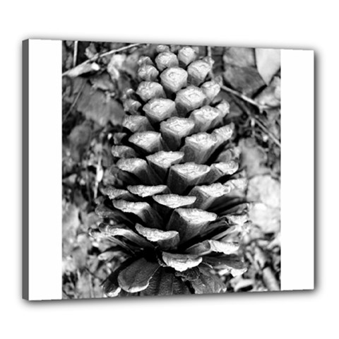 Pinecone Spiral Canvas 24  X 20