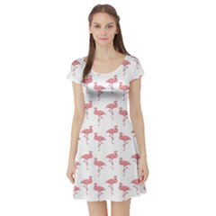 Pink Flamingo Pattern Short Sleeve Skater Dresses