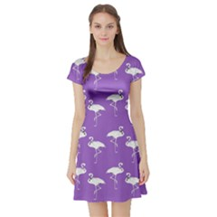 Flamingo White On Lavender Pattern Short Sleeve Skater Dresses