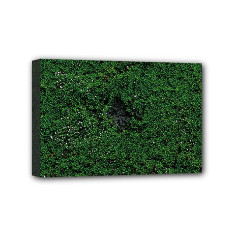 Green Moss Mini Canvas 6  X 4