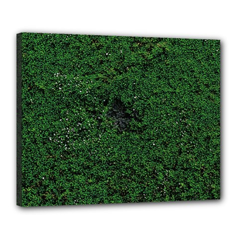 Green Moss Canvas 20  X 16