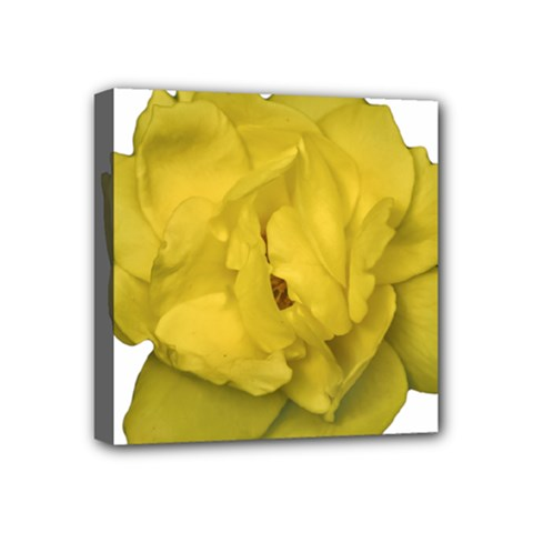 Isolated Yellow Rose Photo Mini Canvas 4  X 4