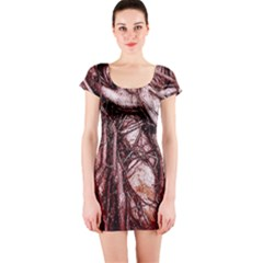 The Bleeding Tree Short Sleeve Bodycon Dresses