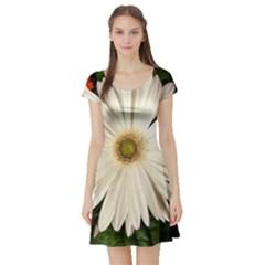 Daisyc Short Sleeve Skater Dresses