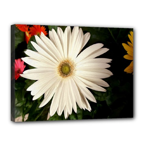 Canvases Canvas 16  X 12