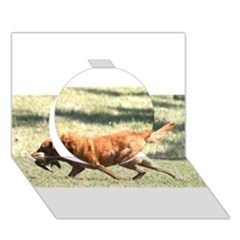 Chesapeake Bay Retriever Retrieving Circle 3D Greeting Card (7x5)