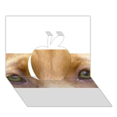 Vizsla Eyes Apple 3D Greeting Card (7x5)