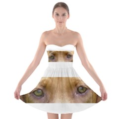 Vizsla Eyes Strapless Bra Top Dress