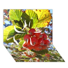 Rowan Clover 3D Greeting Card (7x5)