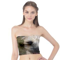 Border Terrier Women s Tube Tops