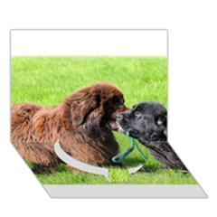 2 Newfies Circle Bottom 3D Greeting Card (7x5)