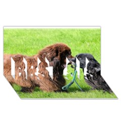 2 Newfies BEST SIS 3D Greeting Card (8x4)