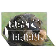 Wirehaired Dachshund Best Friends 3D Greeting Card (8x4)