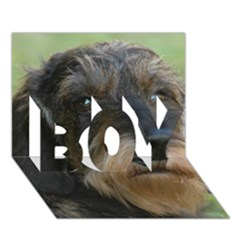 Wirehaired Dachshund BOY 3D Greeting Card (7x5)