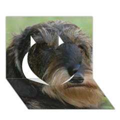 Wirehaired Dachshund Heart 3D Greeting Card (7x5)