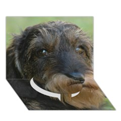 Wirehaired Dachshund Circle Bottom 3D Greeting Card (7x5)