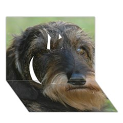 Wirehaired Dachshund Apple 3D Greeting Card (7x5)