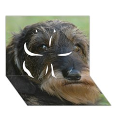 Wirehaired Dachshund Clover 3D Greeting Card (7x5)