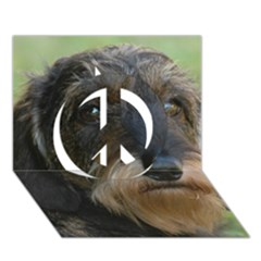 Wirehaired Dachshund Peace Sign 3D Greeting Card (7x5)